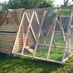 Windows and Light Considerations in your coop